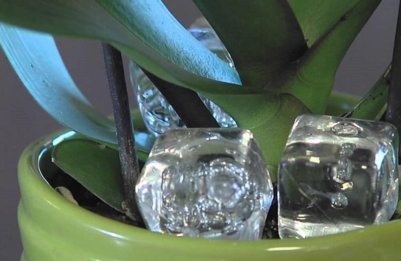 egy-jegkockat-tett-az-orchidea-cserepebe-ami-egy-het-mulva-tortent-az-maga-csoda