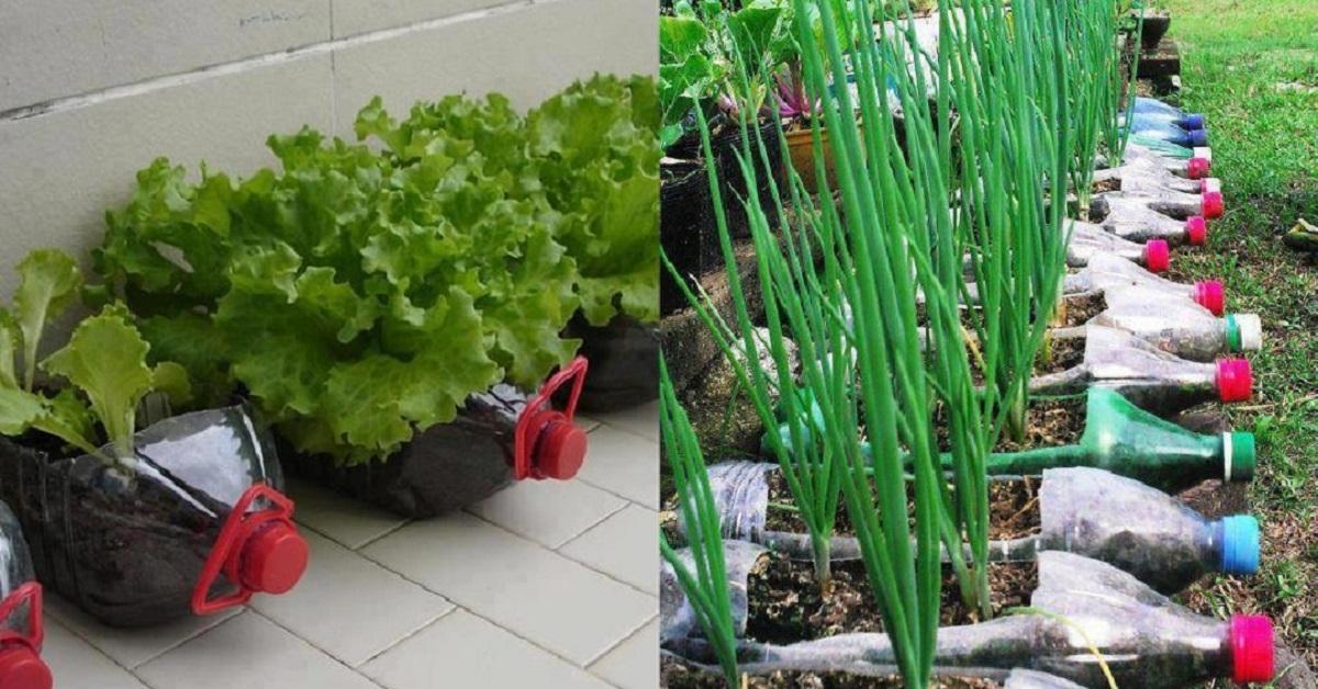 A kert sz el rulta hogyan nevelhetek z lds geket az for Modelo de proyecto de plantas ornamentales