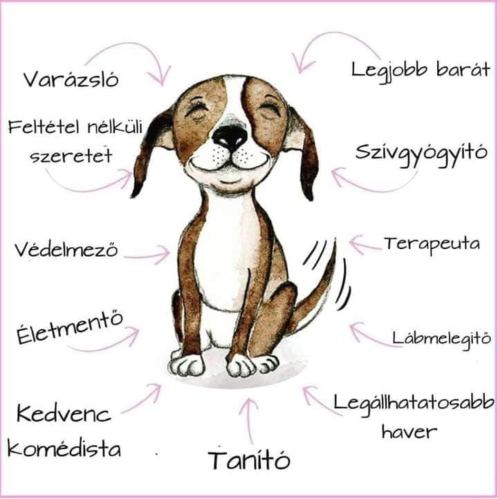 kutyak - Milyen szép lenne a világ, ha az embereknek olyan szívük lenne, mint a kutyáknak