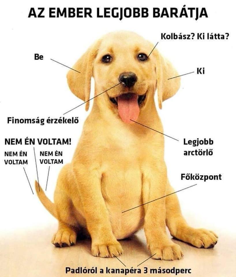 lutya - Milyen szép lenne a világ, ha az embereknek olyan szívük lenne, mint a kutyáknak